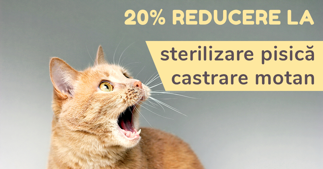 20-reducere-la-sterilizare-pisica-castrare-motan